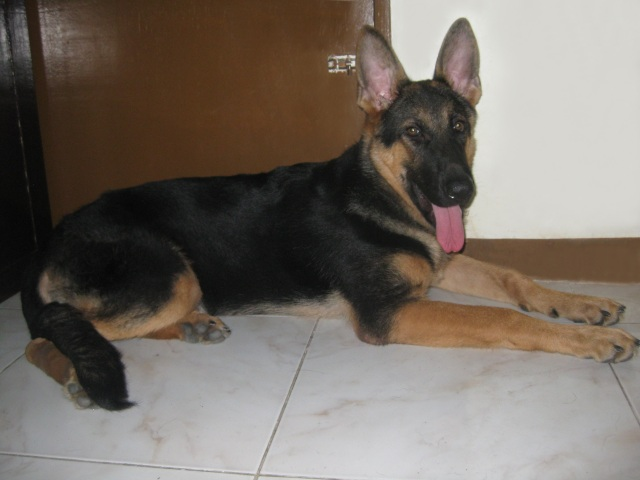 """Maxie, taken recently... at 5 months and 17 days. She's actually sick here with """"pano."""""""